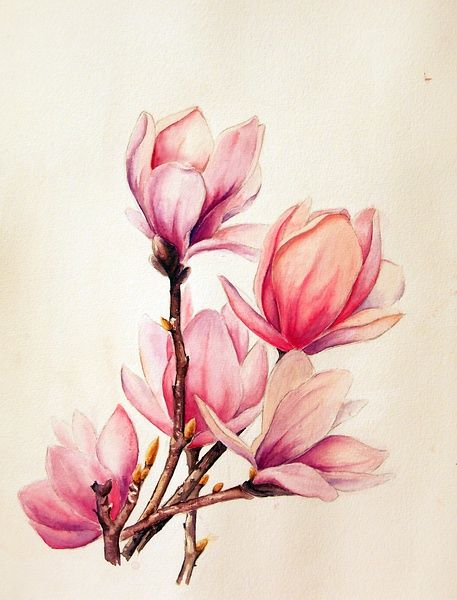 ca2e507f3d6eb7d8e7f63e468246da69--watercolor-tattoo-flower-tulip-tattoo