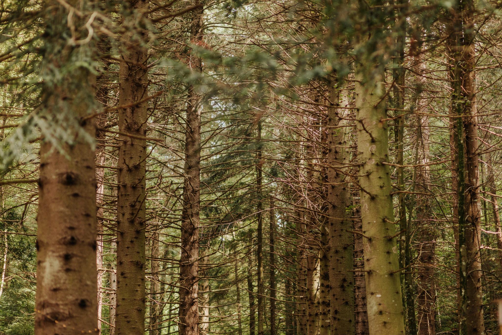 Boda entre árboles. Arboretum de Masjoan. Boda entre secuoyas. Jordi Dalmau novias